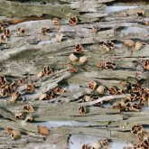 20131117-foraged-nuts-far